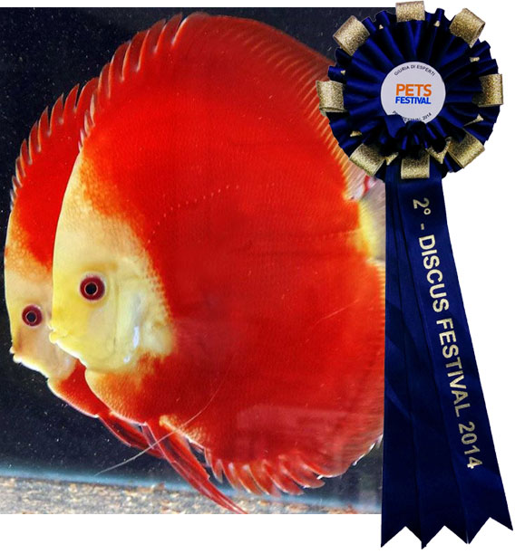 Pets Festival- The Royal Discus